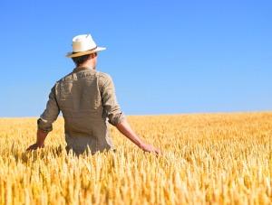 Bando_giovani_agricoltori_imprese_rif